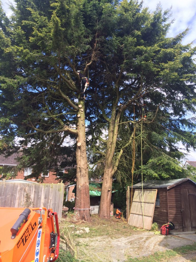 Tree Surgeon Devizes