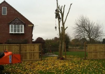 Tree removal Wiltshire