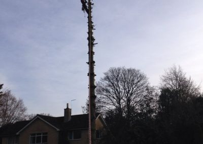 Tree specialists Wiltshire