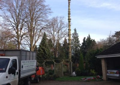 Branch removal Wiltshire