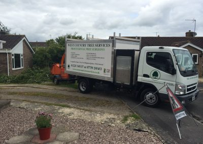 Specialist tree surgeons Bath