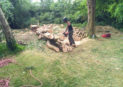 Specialist tree work Wiltshire