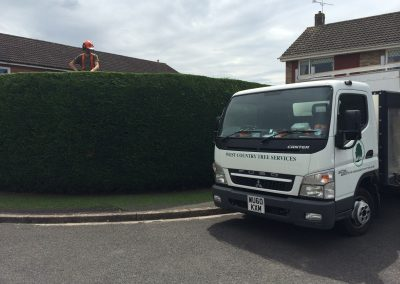 Hedge trimming Trowbridge