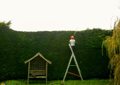 Hedge trimming Wiltshire