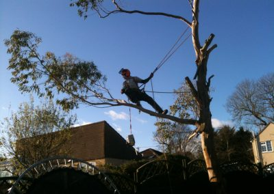 Specialist tree work Bath