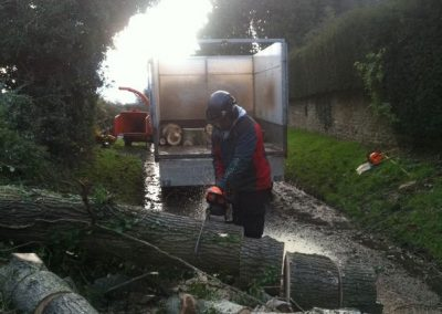 Tree removal Trowbridge