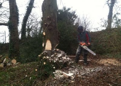 Specialist tree work Trowbridge