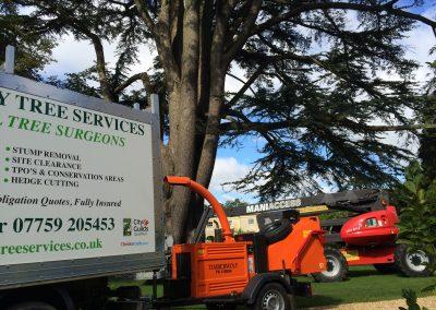 Tree surgeons Wiltshire