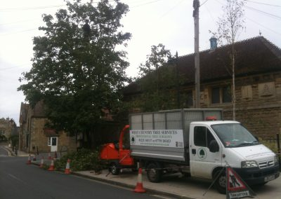 Tree reshaping Devizes