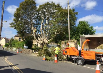 Tree reduction Wiltshire