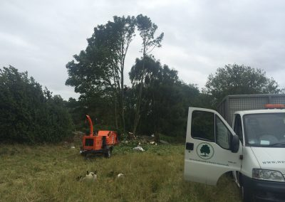 Arborists Trowbridge