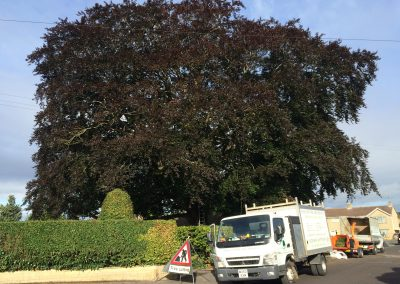 Tree Reduction Trowbridge
