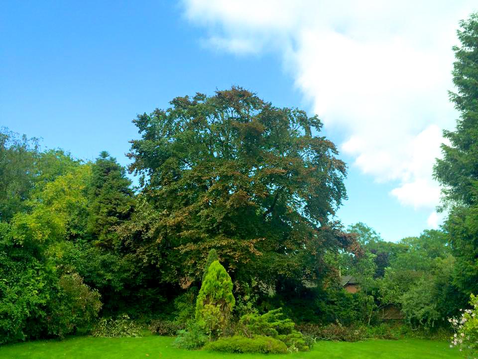 Tree cutting Somerset 4