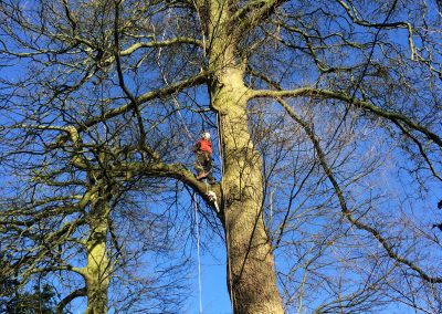 Tree work Swindon