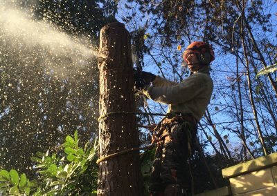 Tree work Melksham