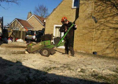 stump grind1