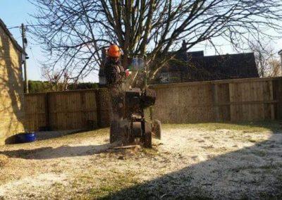 stump grind2
