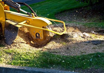 stump-grinding photo for website (002)