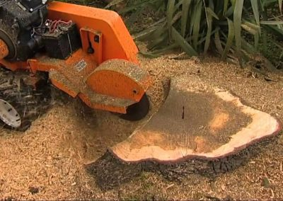 stump-grinding photo for website 1 (002)